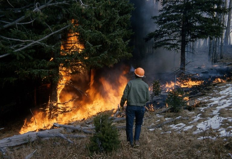Can solar power prevent wildfires?